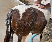 Close up horse Stock Photos