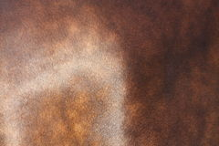 Close up of horse coat Royalty Free Stock Images