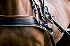 Close up of horse drawn carriage tack Stock Photography