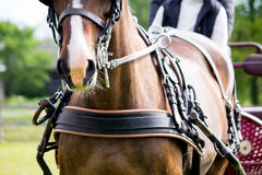 Close up of horse drawn carriage tack Royalty Free Stock Photography