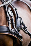 Close up of horse drawn carriage tack. In summer royalty free stock photo