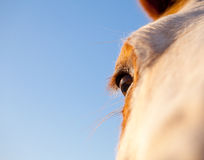 Close up of horse eye against blue sky Royalty Free Stock Image