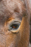 Close up of a Horse eye Stock Images