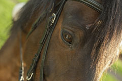 Close up horse eye on meadow Royalty Free Stock Photo