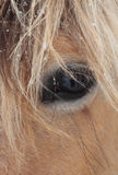Close-up of horse face. Close-up of brown horse face Royalty Free Stock Photo