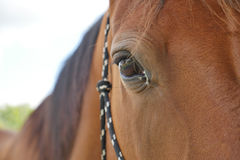 Close-up of Horse in farm Stock Photography