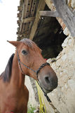 Close-up of Horse in farm Stock Photos