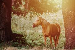 Close up on horse on the field Royalty Free Stock Photos