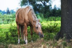 Close up on horse on the field Stock Image