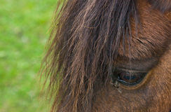 Close-up of horse in field Royalty Free Stock Images