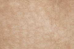 Close up of horse hair,fur, skin, leather use as animals and nat Royalty Free Stock Photography