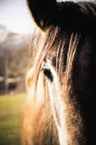 Close-up of horse head in sunlight Stock Photos