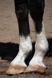 Close up of horse legs Royalty Free Stock Photos