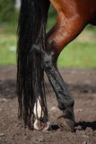 Close up of horse legs Stock Images