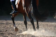 Close up of horse legs running Royalty Free Stock Images