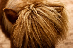 Close-up of horse mane. Rural concept Royalty Free Stock Image