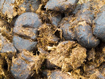 Close-up horse manure background texture pattern Stock Photos