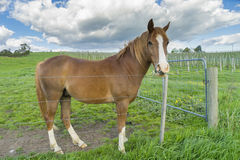 Close-up of horse in meadow Stock Images
