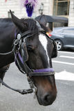 Close up of horse Stock Images