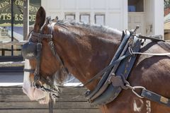 Close up horse in Old Wild West Cowboy town with horse drawn carriage and saloon in background stock photography