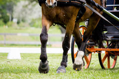 Close up of horse pulling carriage in the field Stock Photo