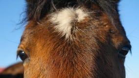 Close up of a horse`s eye stock photos
