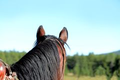 Close up of a Horse Head from Behind. Close up of a Horse`s Head from Behind in the Saddle Overlooking the Tree Landscape Royalty Free Stock Photography