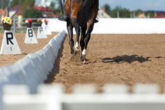 Close up of the horse shoe in motion. Dressage competition Stock Images