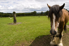Close-up of a horse. Wicklow, Ireland. Royalty Free Stock Photos