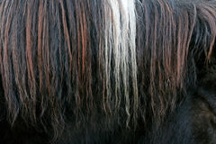 Close up of horsehair Stock Photography