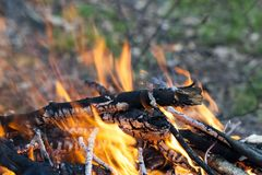 Close up of hot burning fire wood coal Royalty Free Stock Photos