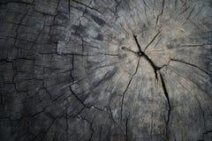 Close-up Houten textuur Jaarringen van boomstomp van aard worden verminderd die Royalty-vrije Stock Fotografie