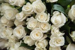 Close-up of a huge bouquet of white roses. Background of the many roses wedding, the day of St. Valentine stock image