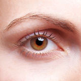 Close-up of human eye. Close-up of female human eye with eyebrow royalty free stock photography