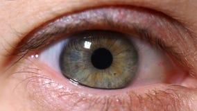 Close-up human eye , eyes narrowed pupil. A close-up of a female eye, eyes narrow the pupil. Eye iris stock video
