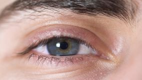 Close-up of human eyes. Beautiful eye of young man with pupil shrinking from light. Human eye gray and brown shade with royalty free stock photography