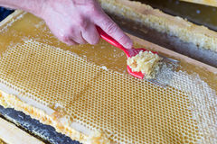 Close up of human hand extracting honey from honeycomb Stock Images