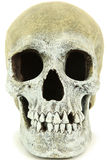 Close Up Of Human Skull Stock Photography