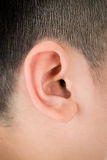 Close up humano da orelha Imagens de Stock