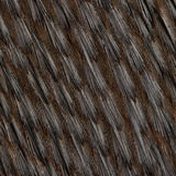 Close-up of Humboldt Penguin feathers Royalty Free Stock Photography