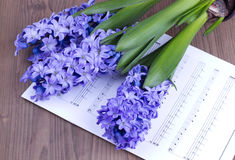 Close up hyacinth with note sheet Stock Photo