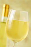 Close-up of a ice cold glass of white wine Royalty Free Stock Photography
