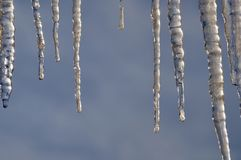 Close up of icicles. Abstract. Hanging icicles with very interesting shape and texture. Dark blue background. Some room for text stock images