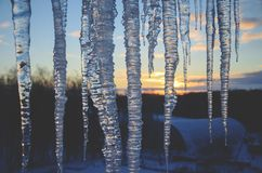 Close up of icicles on a background of sunset winter sky. stock images