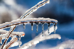 Close Up of Icicles on a Twig Stock Photo