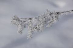 Close-up of icy branch tree Royalty Free Stock Photos