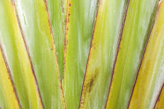 Close-up image of an agave plant leave Royalty Free Stock Photography
