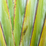Close-up image of an agave plant leave Stock Images