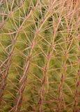 Close up image of a Arizona fishhook Cactus Stock Photos