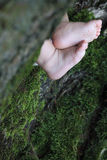 Close up image of baby child legs behind a tree Stock Photo